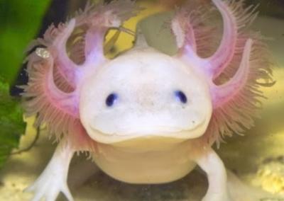 Test Axolotl
